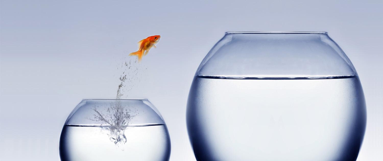 systemisches Coaching für Ihr Business